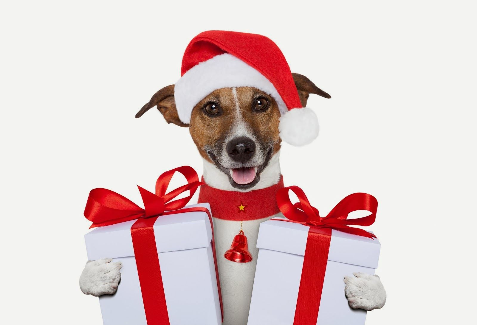 Dog-Christmas-gift-wallpapers132014