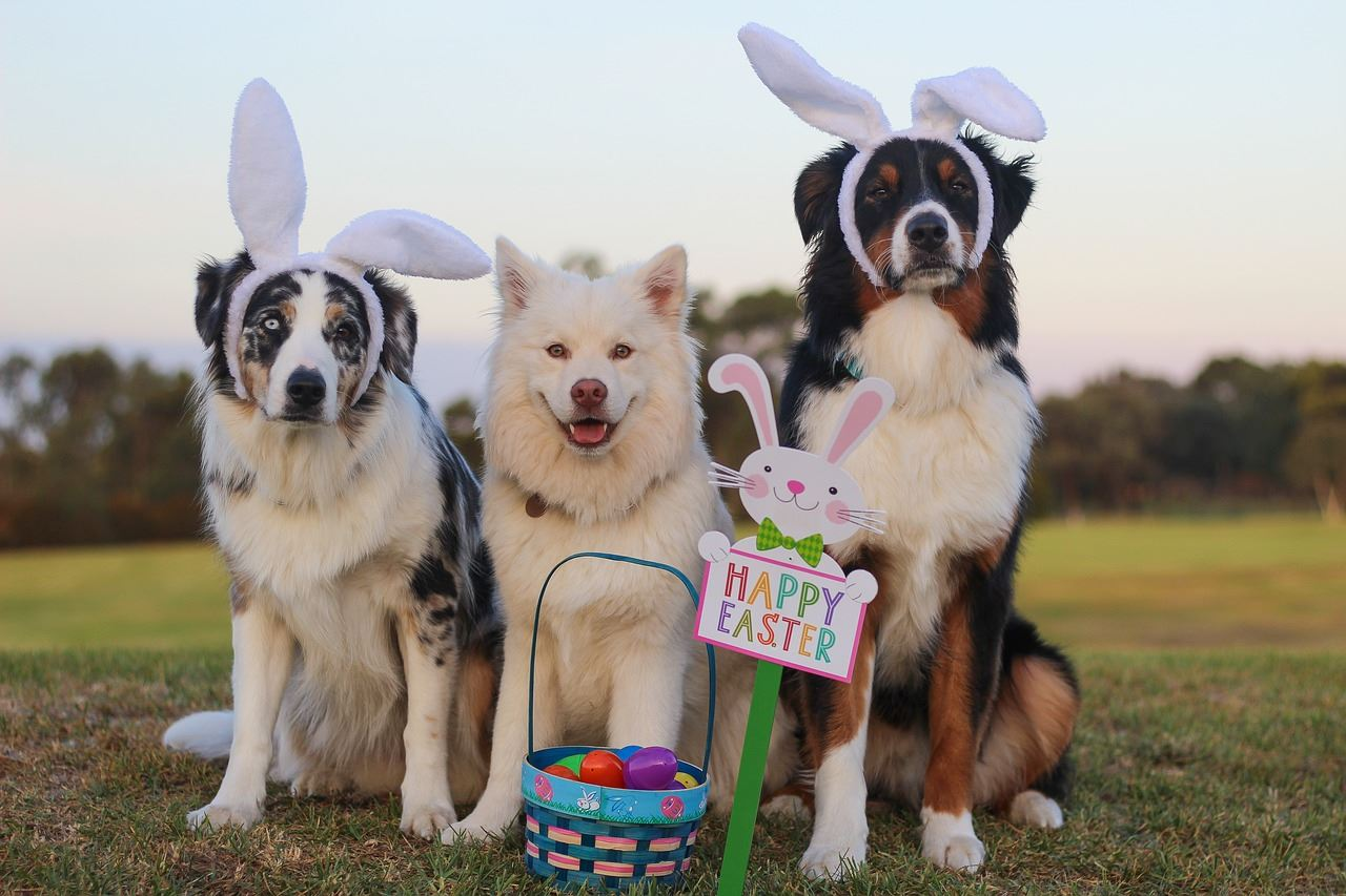 Easter-Dogs-DONE